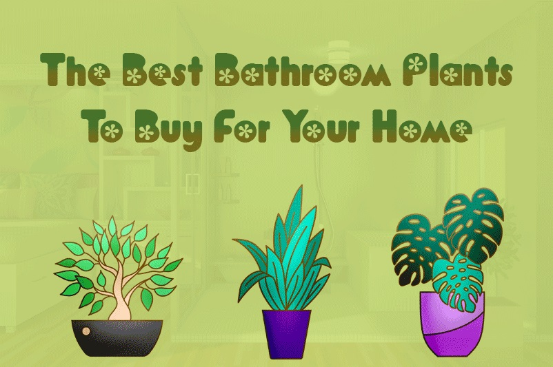 The Best Bathroom Plants To Buy For Your Home